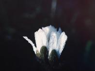 blossom-802064_960_720.jpg