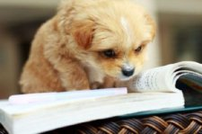 amusing-animal-photos-reading-dog