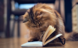 Animals___Cats_Cat_reading_a_book_088072_.jpg